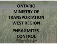 Phragmites and the Ministry of Transportation